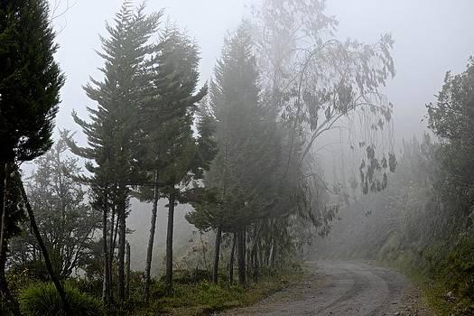 Los Nevados National Park by Kike Calvo Kike Calvo