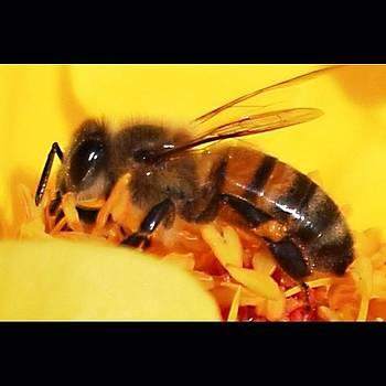 #macro #bee #floweroftheday by Mark Jackson