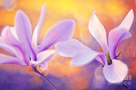 Magnolia Abstraction by Izabela Kaminska