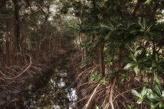 Thomas Schreiter - mangrove wood
