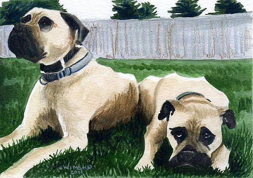 2 Mastiffs by Christine Winship