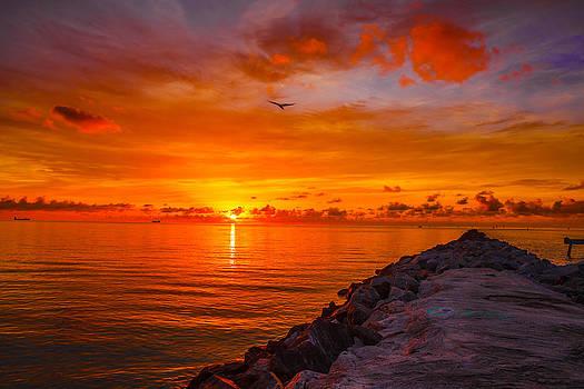 Miami Sun by Nicholas Tancredi
