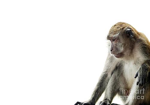 Tim Hester - Monkey