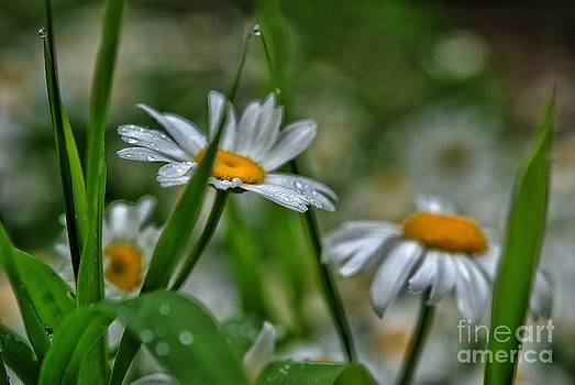 Morning Dew by Christy Phillips