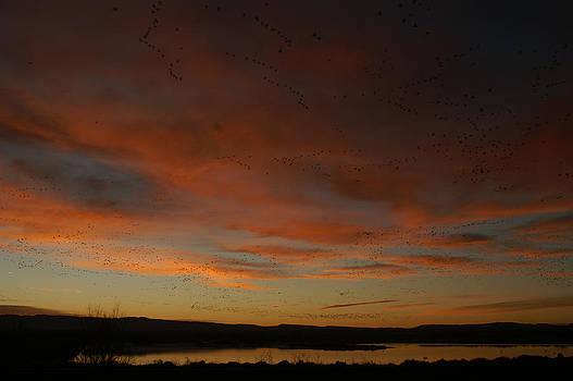 James Gay - Morning Sky in Bosque