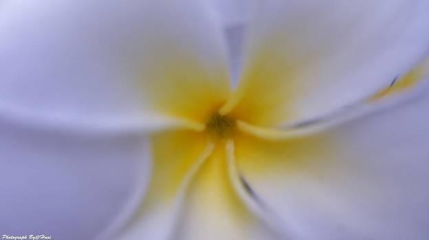 My Plumeria by Gornganogphatchara Kalapun