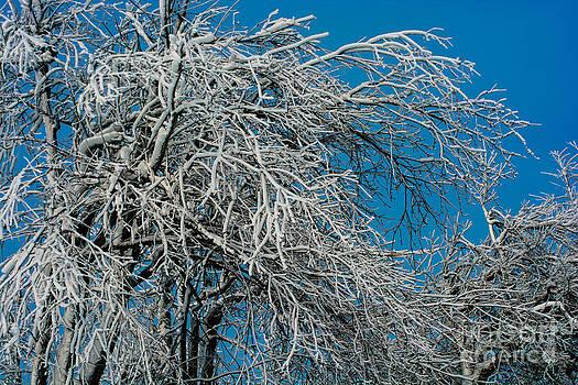 Niagara Falls Frozen Trees by John Baumgartner