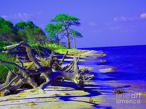 North Florida Beach by Annette Allman