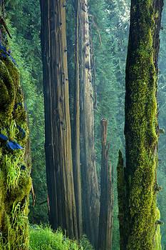 Mary Lee Dereske - Northwest Forest