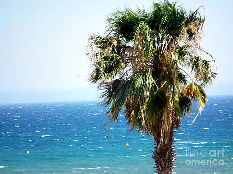 Palm and sea by Stefano Piccini