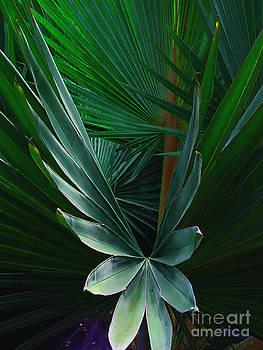 Susanne Van Hulst - Palm frond
