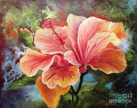 Peach Hibiscus by Barbara Haviland