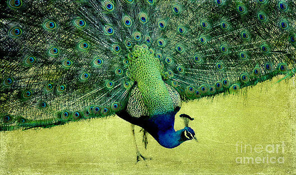 Peacock Plume by Linde Townsend