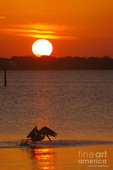 Pelican sunset by Tannis  Baldwin