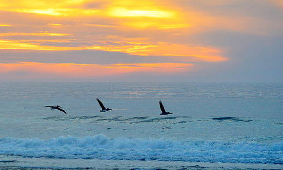 Pelicans Flying at Sunset by AJ  Schibig