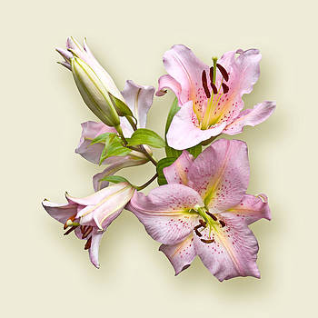 Pink Lilies on Cream by Jane McIlroy