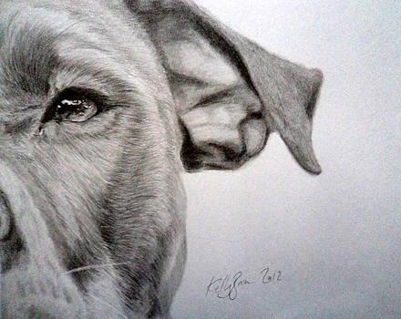 Pit-bull by Skyrah J Kelly