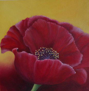 Poppy by Brenda Everett