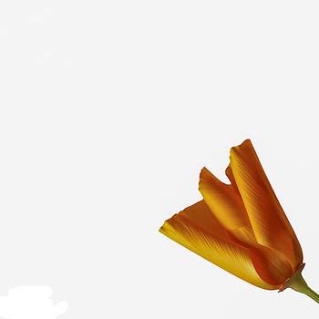 Jan Hagan - Poppy Bud