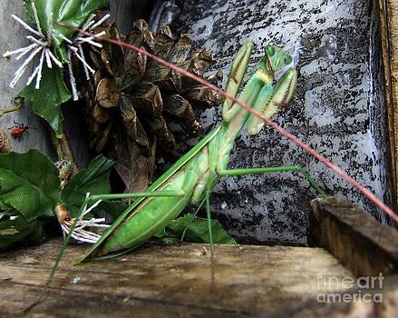 Scott B Bennett - Prayen Mantis