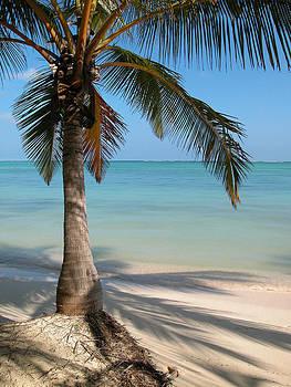 Punta Cana Palm Tree by Rob Huntley