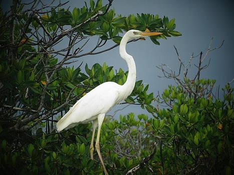 Frederic BONNEAU Photography - Reddish Egret