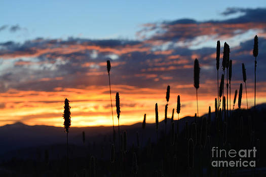 Kate Avery - Rocky Mountain Sunset