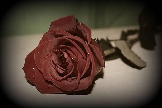 Rebecca Frank - Rose