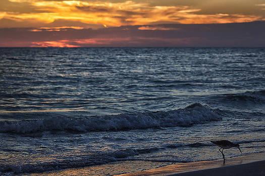 Sand Runner by George Ferreira