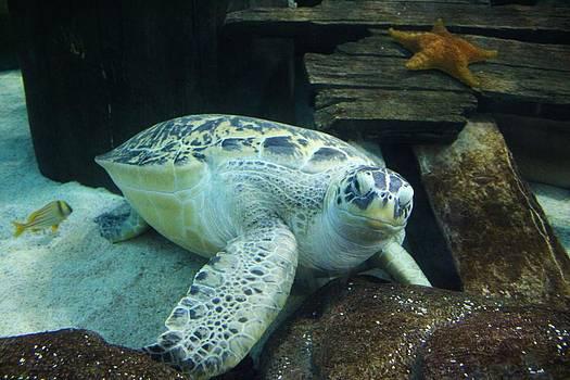 Paulette Thomas - Sea Turtle
