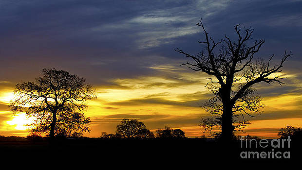 Darren Burroughs - Silhouette Sunrise