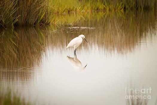 Michael McStamp - Snowy Egret