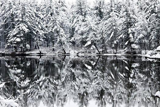 Brenda Giasson - Snowy Morning