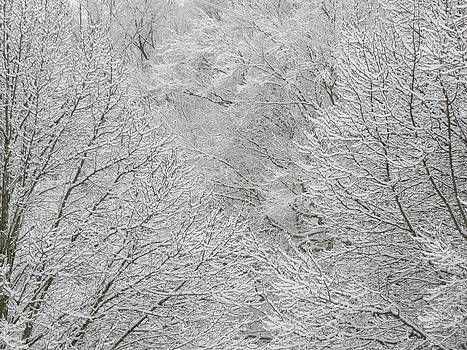 Snowy Trees by Kathy Long