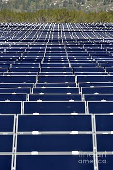 Solar Panels in Farm by Sami Sarkis
