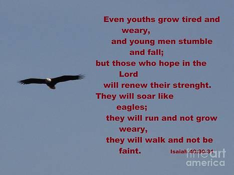 Spring Bald Eagles 2013 XI by Daniel Henning