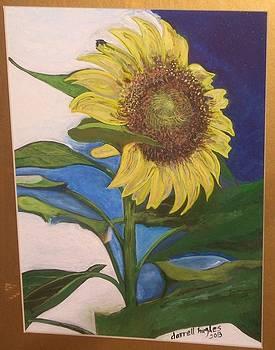 Sunflower by Darrell Hughes