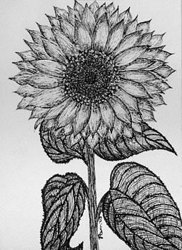 Pam Belcher - Sunflower