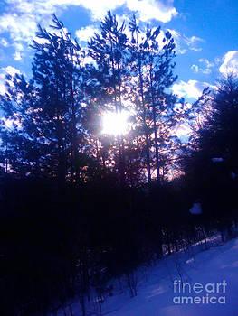 Sunlight Winter Pines by Seay Harshaw Delgado