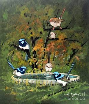 Superb Fairy Wrens in my garden by Audrey Russill