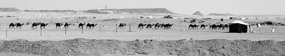 The Camel Line by Heather Gordon