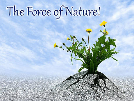 Dreamland Media - The Force of Nature