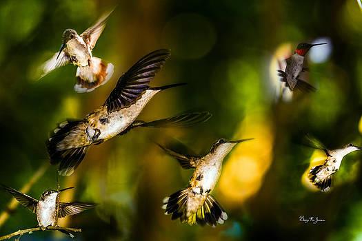 Hummingbirds - The Gathering by Barry Jones