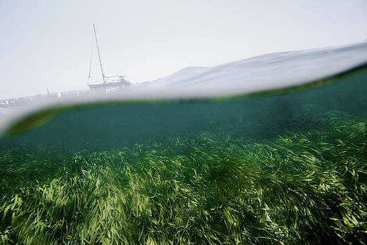 Nano Calvo - The Oceanic Posidonia Is An Endemic