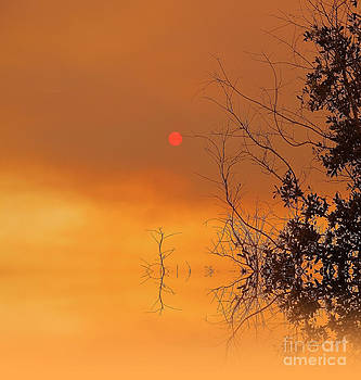 The Red Sun by Zsuzsa Lado