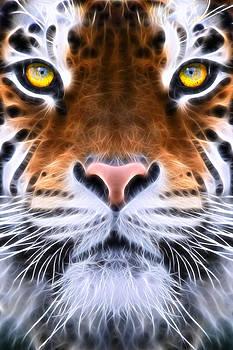 Tiger Eye by John Robichaud