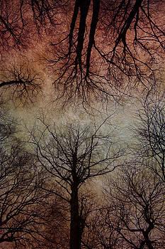 David Pringle - Tree Canopy