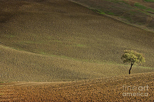 Tree in landscape Val D'Orcia Tuscany Italy by Robert Leon