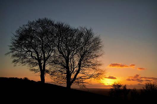 Trees on Raddon Top by Pete Hemington
