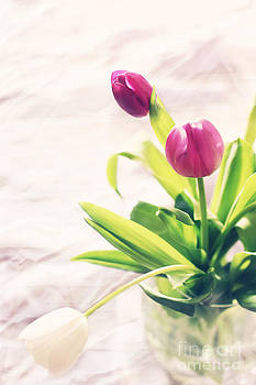 LHJB Photography - Tulips